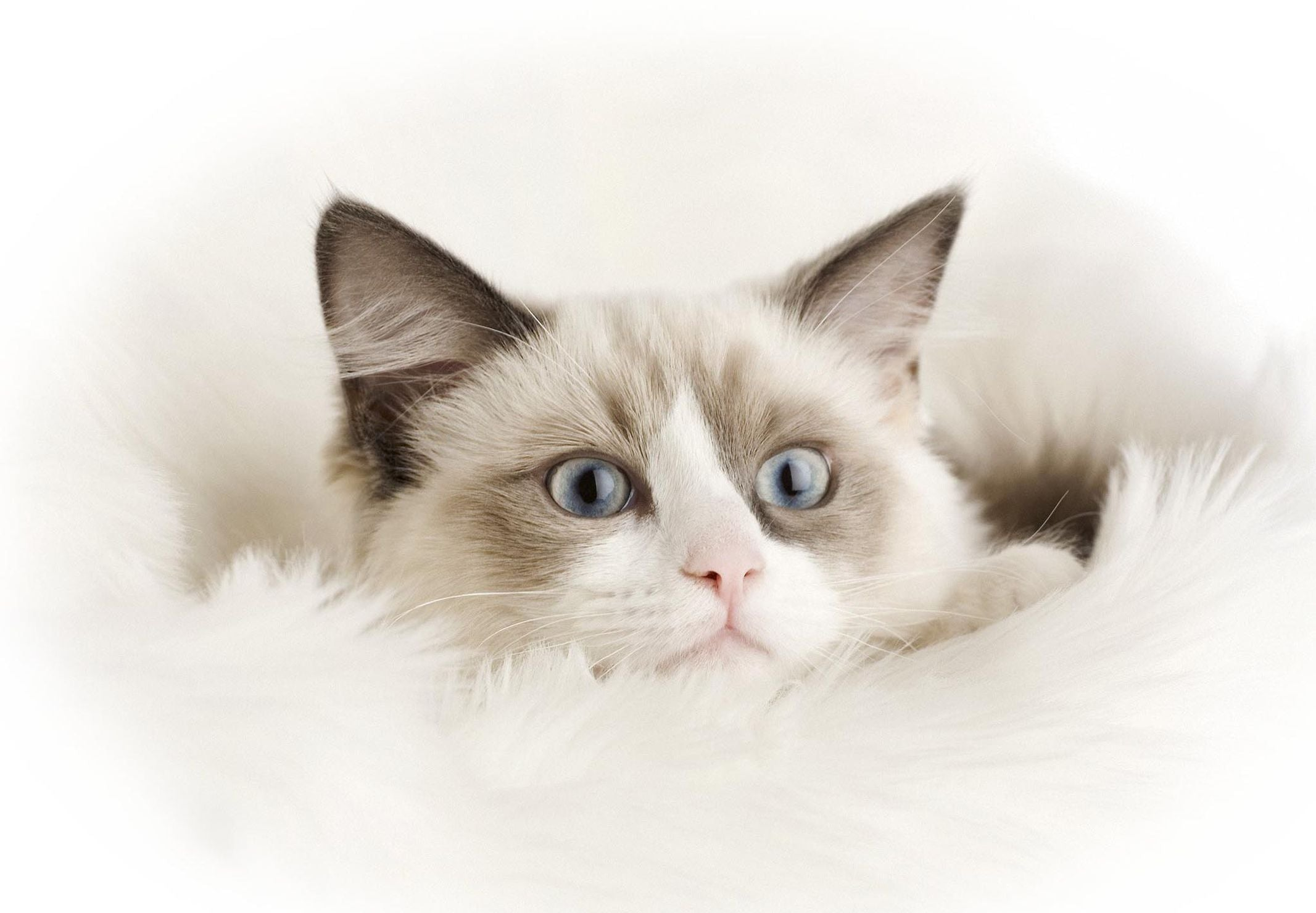 Is Tuna Good for Your Cat's Health?