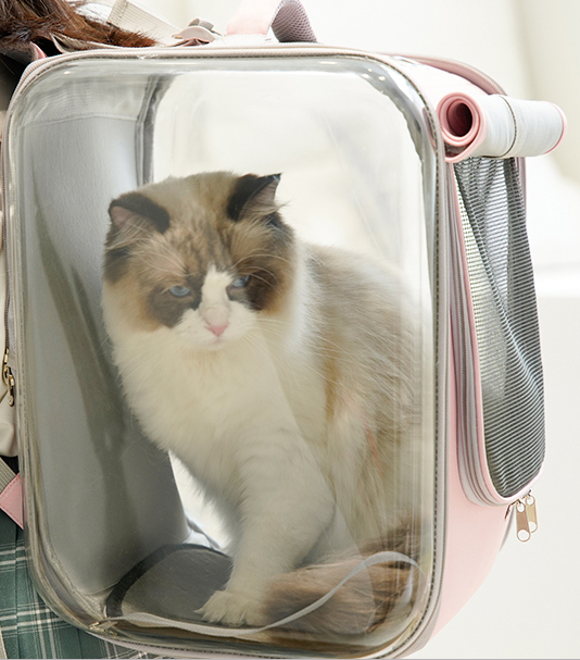 Soft Box Breathable Mesh Waterproof Transparent Designer Portable Hard Pet Traveler Carrier Backpack For Small Medium Cats - Pawsmeme.com