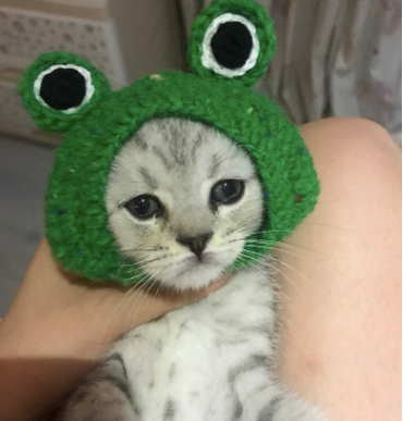 Frog Knit Handmade Pet Hat Halloween Party Costume Headwear Accessory For Small Medium Cats - Pawsmeme.com