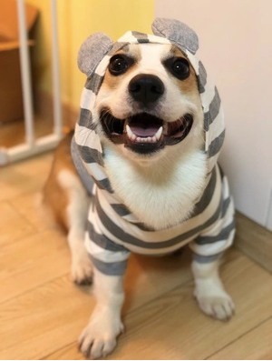 Cute Ears Stripe Fall Hoodie Sweater Costume For Small Medium Dogs - Pawsmeme.com