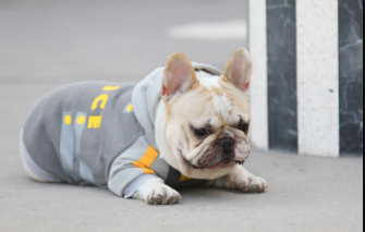 Grey Warm Street Fall Winter Sweater Hoodie Costume For Small Medium Dogs - Pawsmeme.com