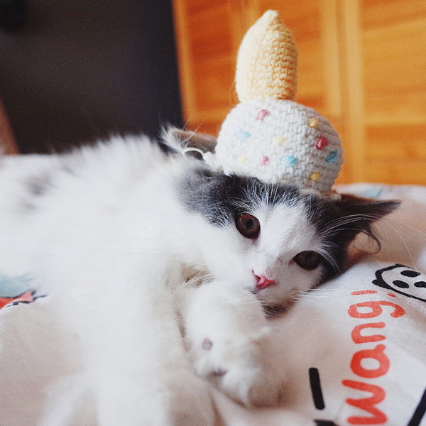 Cute Ice Cream Knit 100% Handmade Pet Hat Halloween Party Costume Headwear Accessory for Small Medium Cats - Pawsmeme.com
