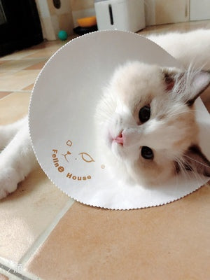 Ultrathin Waterproof Pet Recovery Cone After Surgery Protective Elizabethan E-Collar For Small Medium Large Cats - Pawsmeme.com