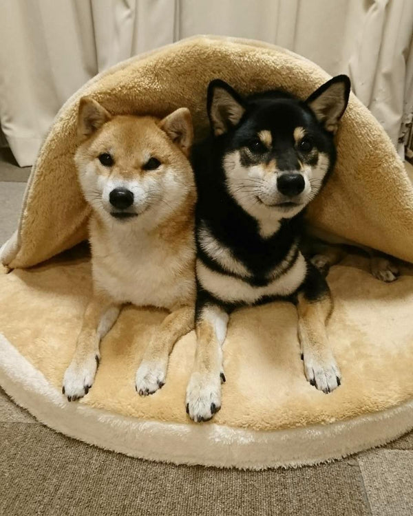 Cutest Bear Blanket Tuck In Warm Indoor Pet Bed For Small Medium Large Dogs - Pawsmeme