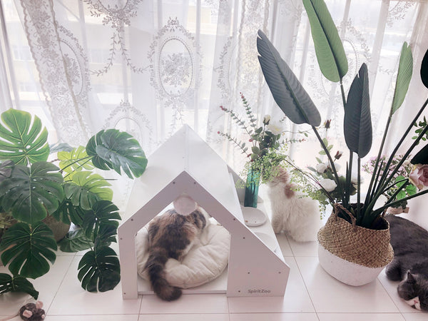 Modern White Indoor Cushion Pet House Home Décor Feeder All in One For Small Medium Cats - Pawsmeme.com