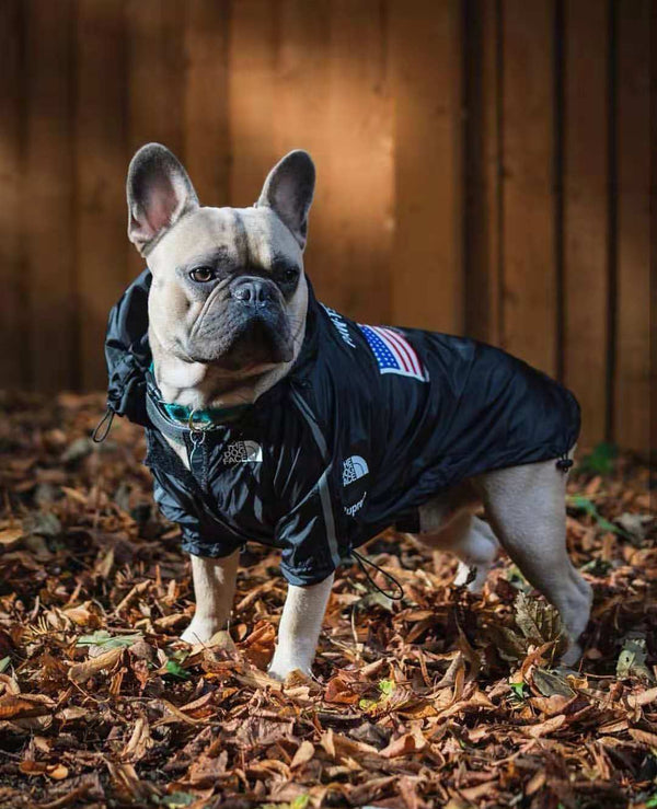 North Face Style USA Flag Outdoor Waterproof Raincoat Reflective Stripe For Small Medium Dogs - Pawsmeme.com