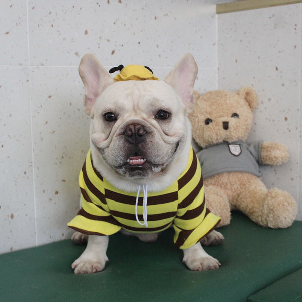 Honeybee Ribbon Cotton Sweater Designer Costume For Small Medium Large Dogs - Pawsmeme.com