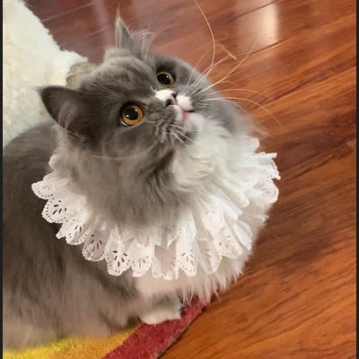 Vintage Lolita Lace White Luxury Handmade Adjustable Designer Pet Collar Costume Scarf Bandanas For Small Medium Cats - Pawsmeme.com