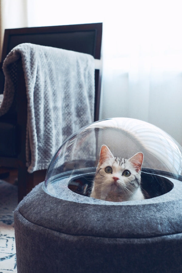 Spaceship Clear Ceiling Grey Felt Designer Indoor Pet Bed For Small Medium Cats - Pawsmeme.com