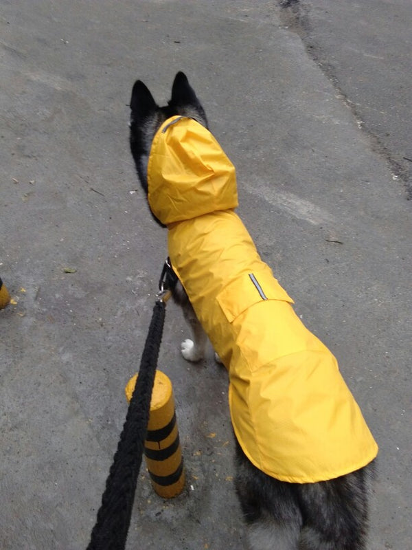MORE COLORS Bright Hoodie Raincoat Easy Wear Reflective Stripe For Small Medium Large Dogs - Pawsmeme.com