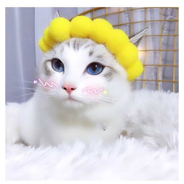 Cute Sunflower Petal Pet Hat Halloween Party Costume Headwear Accessory For Small Medium Cats - Pawsmeme.com