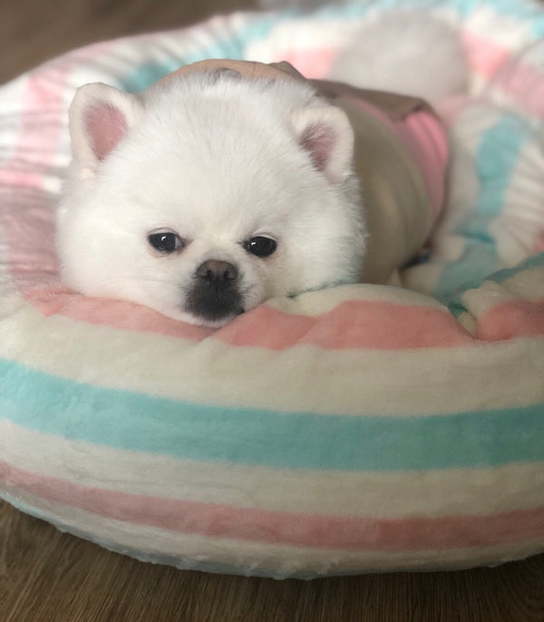 Baby Pink Blue Extra Soft Cushion Deep Sleep Indoor Pet Bed For Small Medium Dogs - Pawsmeme.com
