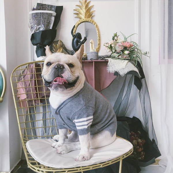 Thom Brown Style Stripe Thin Knit Sweater Costume For Small Medium Dogs - Pawsmeme.com