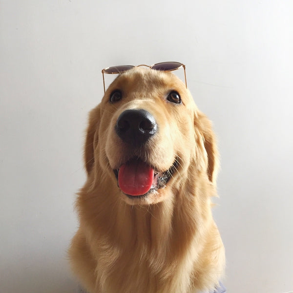 Vintage Gradient Round Clear Lens Glasses Goggle Sunglasses Photography Posing Props Decoration For Small Medium Large Dogs - Pawsmeme.com