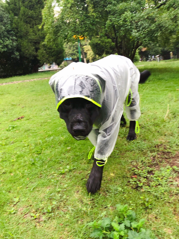 Clear Elastic Button Outdoor Raincoats Leg Protection For Large Dogs - Pawsmeme