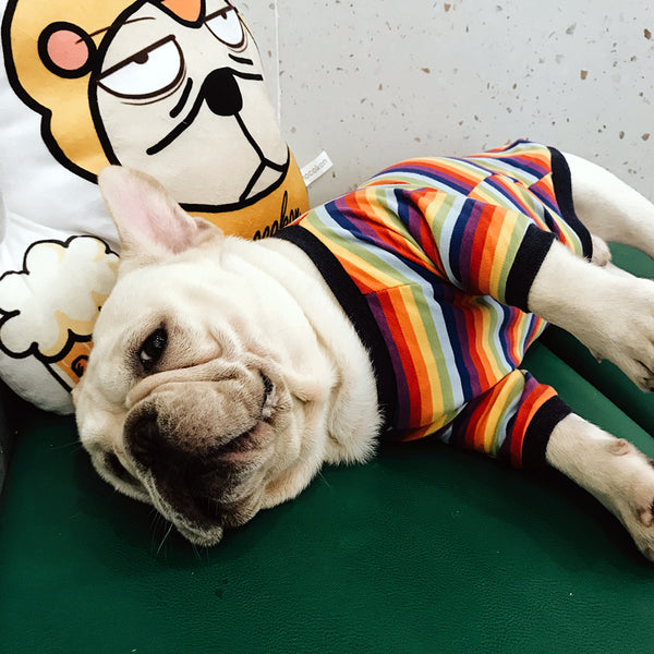 Street Fashion Rainbow Summer T-shirt Costume For Small Medium Dogs - Pawsmeme.com
