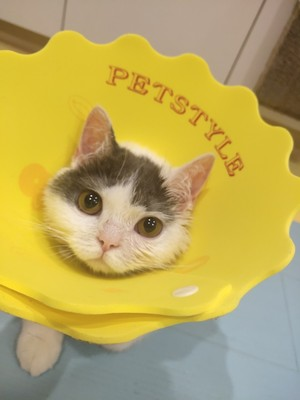 Yellow Petal Ultrathin Soft Pet Recovery Cone After Surgery Protective Elizabethan E-Collar For Small Medium Large Cats - Pawsmeme.com