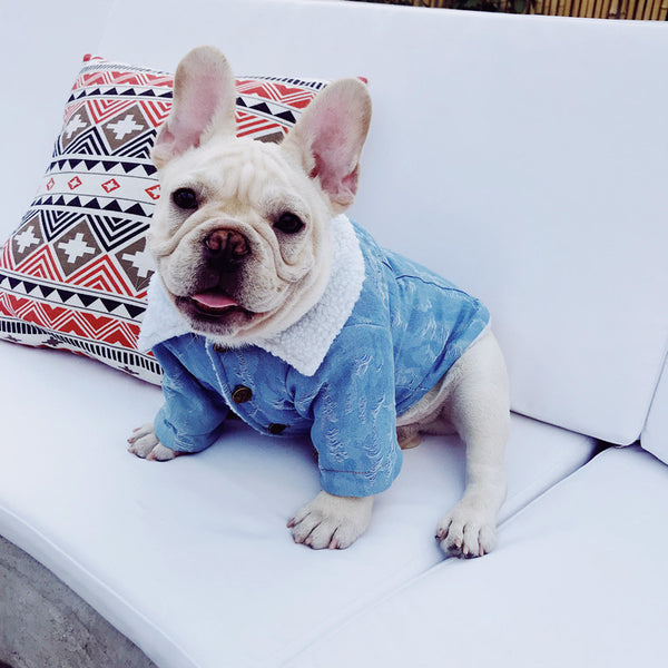 Jeans Windproof Fall Winter Thick Jacket Designer Costume For Small Medium Dogs - Pawsmeme.com