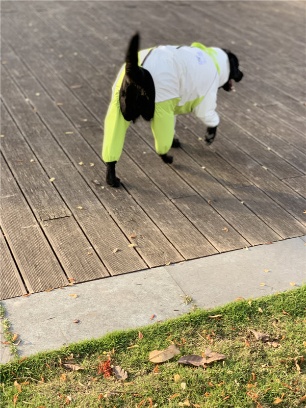 Bright Neon Color Outdoor Waterproof Raincoat Leg Protection For Large Dogs - Pawsmeme.com