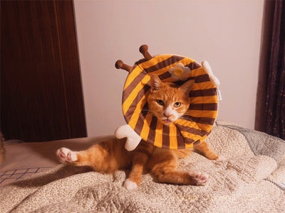 Honeybee Ultrathin Pet Recovery Cone After Surgery Protective Elizabethan E-Collar For Small Medium Large Cats - Pawsmeme.com