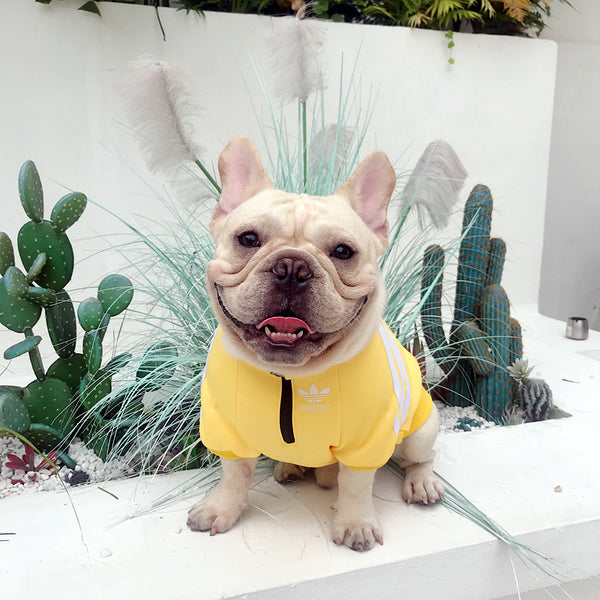 Adidas Style Fall Winter Sweater Sports Costume For Small Medium Dogs - Pawsmeme.com