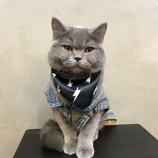 Off White Style Jeans Street Vest Costume For Small Medium Cats - Pawsmeme.com