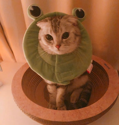 Green Frog Ultrathin Pet Recovery Cone After Surgery Protective Elizabethan E-Collar For Small Medium Large Cats - Pawsmeme.com