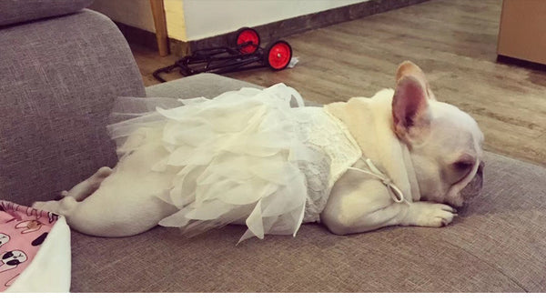 Princess Feather White Summer Lace Dress Costume For Small Medium Dogs - Pawsmeme.com