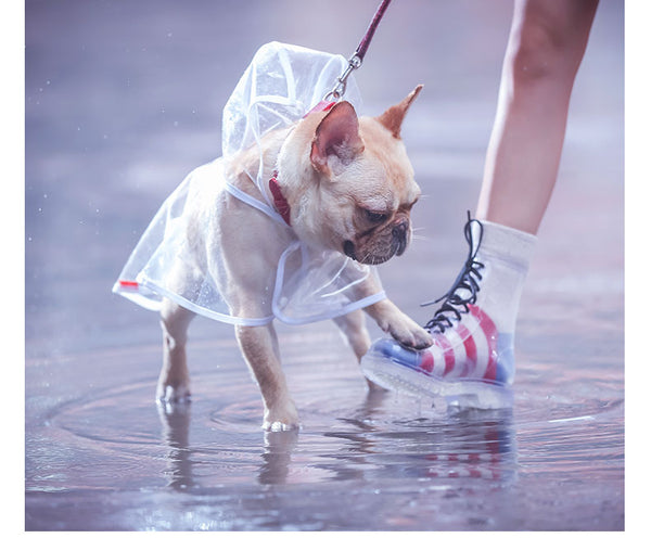 Clear Designer Raincoat Fashion White Stripe For Small Medium Dogs - Pawsmeme.com