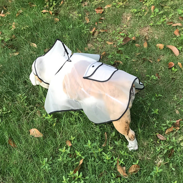Cute Witch Style White Clear Face Shield Raincoat For Small Medium Dogs - Pawsmeme.com