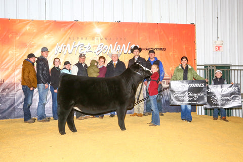 Maggies many times champion sired by Shocker