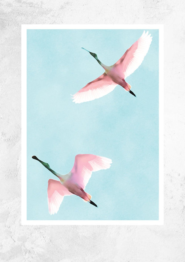 Two Flying Flamingos