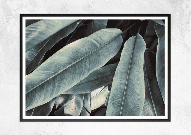 Banana Leaves Study No III