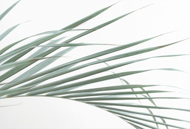 Large Palm Leaf
