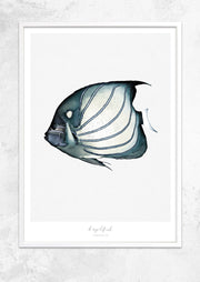 Marine Life Series - Angelfish