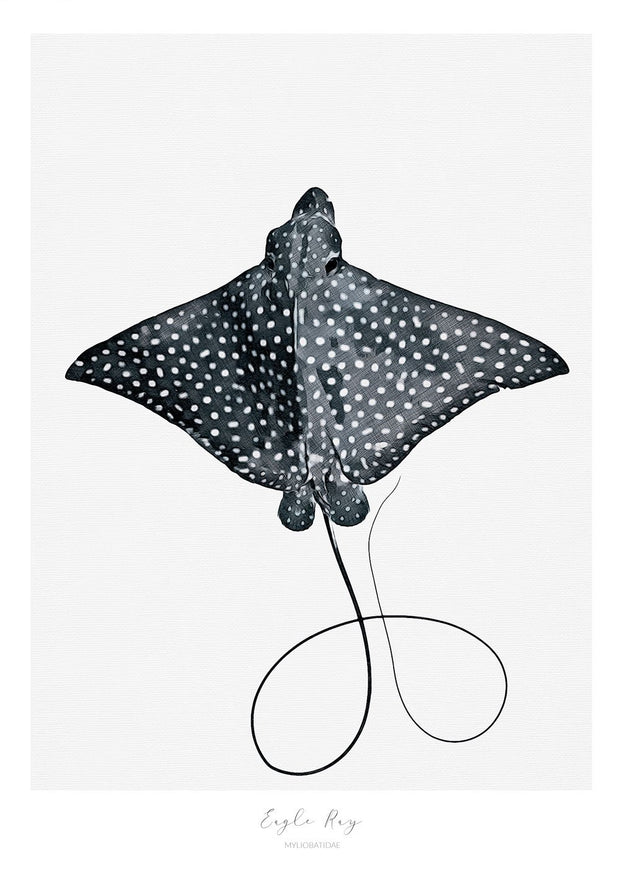 Marine Life Series - Eagle Ray