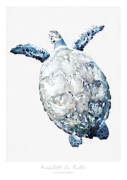 Marine Life Series - Hawksbill Sea Turtle