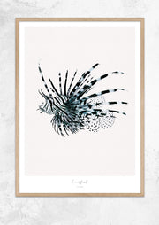 Marine Life Series - Lionfish