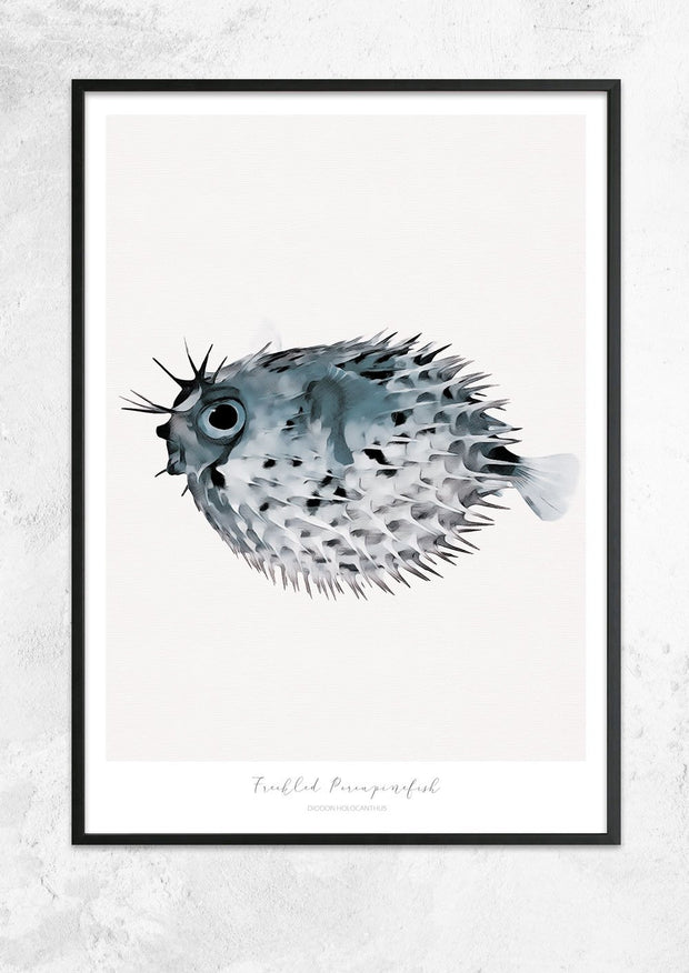 Marine Life Series - Freckled Porcupine Fish
