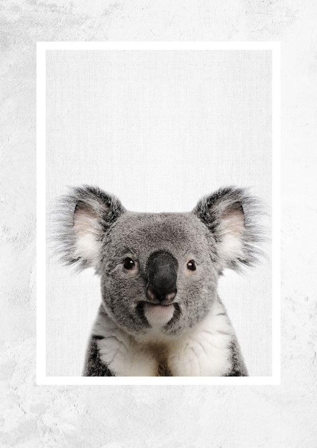 Nursery Animals - Koala