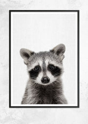 Nursery Animals - Raccoon