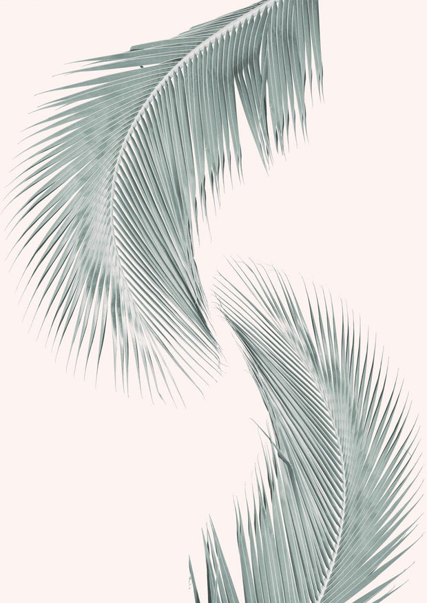 Silver Coconut Palms No I