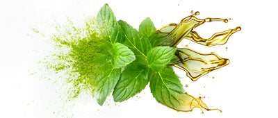 Revitalize Your Hair Growth with Peppermint Oil