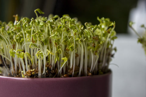plant sprouts in a container