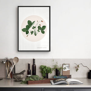 Wild Strawberry ART PRINT