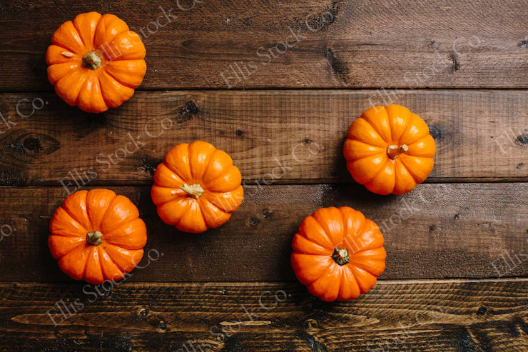 Mini Pumpkins 14