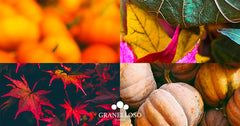 Autunno DIGI Downloads