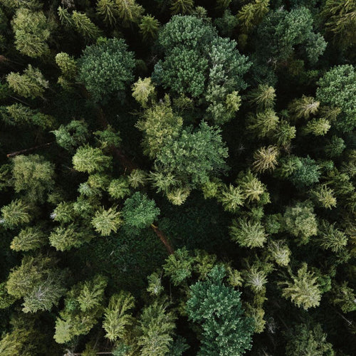aerial-view-of-a-green-forest