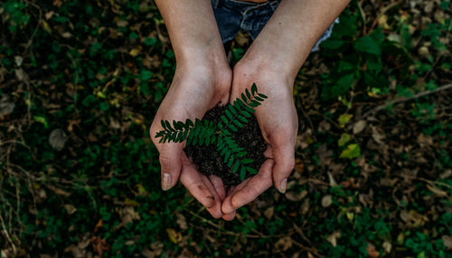 hands-holding-a-small-plant-in-soil