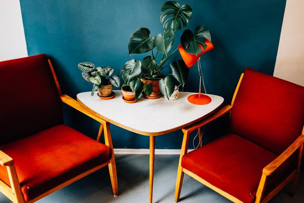 ic: Beautiful plants livening up a room with a white table and red chairs